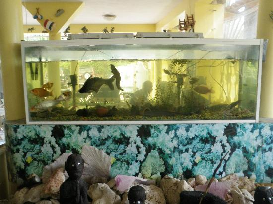 Hotel mango: fishtank