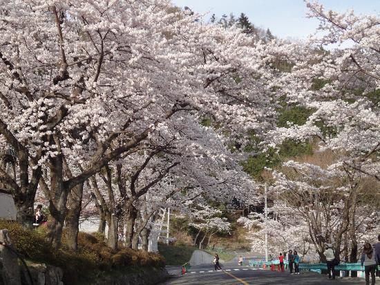 Kaizu Osaki: 海津大崎上陸