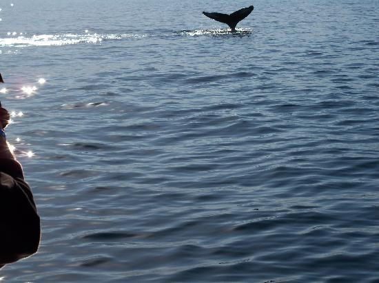Puerto Vallarta, México: la coda maestosa