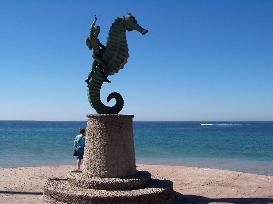 Puerto Vallarta, Mexiko: il cavalluccio spensierato