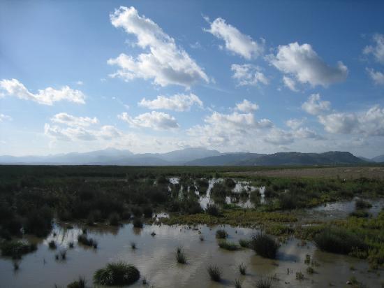 Ca'n Picafort, إسبانيا: Wetlands