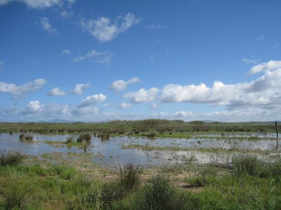 Ca'n Picafort, Spanyol: Wetlands