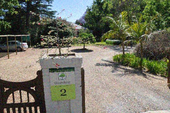 The LemonTree House: The Lemon Tree House oprit