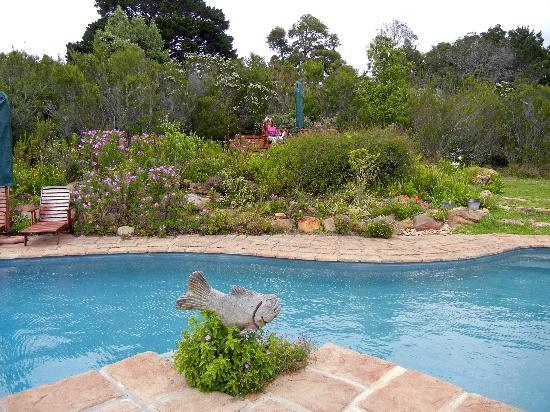Fynbos Ridge Country House & Cottages: The pool... looking back... very secluded...