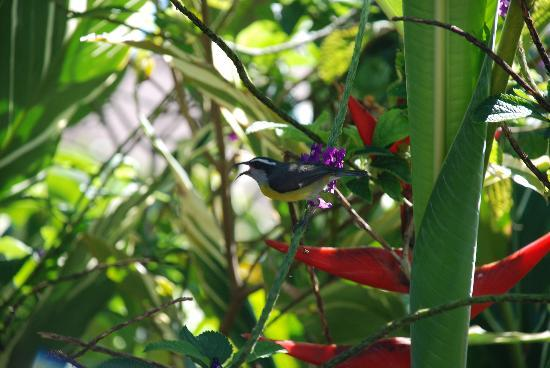 Arenal Springs Resort and Spa: one of the many birds on the property