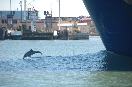 Port Aransas, TX: dolphin