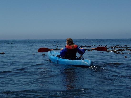 Smooth, beautiful paddling at kayak Mendocino