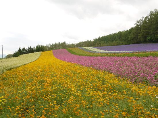 Furano, Giappone: ファーム富田