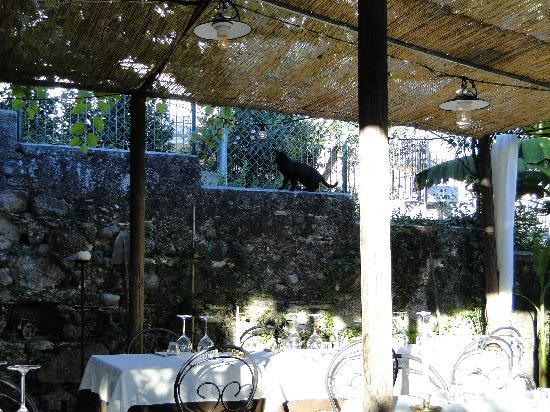 Osteria al Torcol: Al Torcol Gastgarten