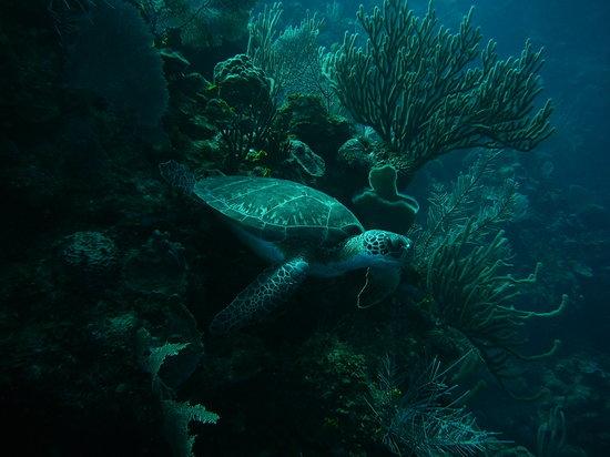 Mayan Princess Beach & Dive Resort: great marine life to see - snorkeling or diving !