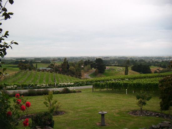 Te Kiteroa Lodge: Overlooking the vineyard