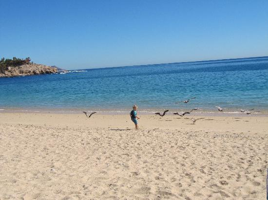 Chileno Beach: My child chasing birds...
