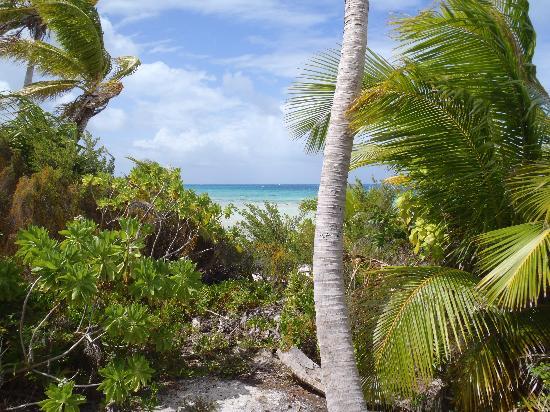 Tikehau Ninamu Resort : Looking from our patio