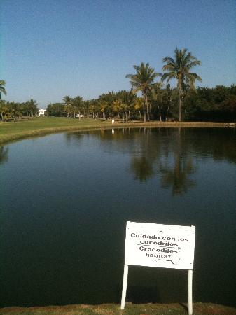 Hard Rock Hotel Vallarta: Golfers: Watch out for the crocs!!!