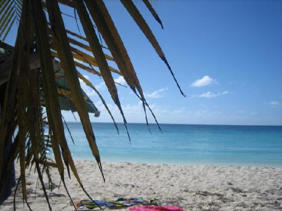 Evamer: Vieques beach