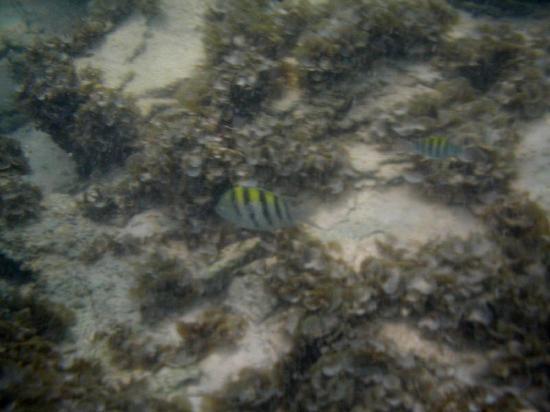 Пунта-Кана, Доминикана: En el fondo del mar
