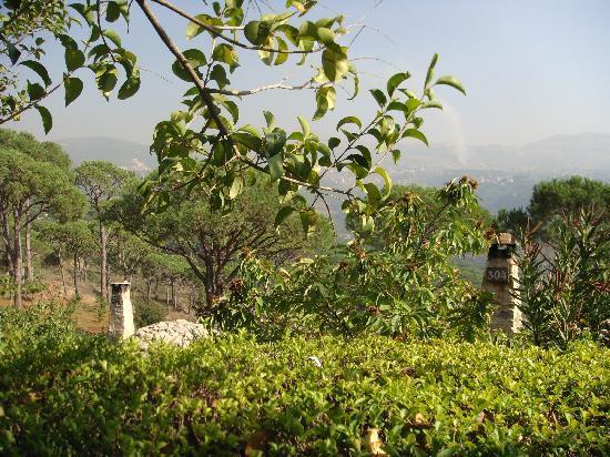 Pineland Hotel and Health Resort: Incredible Views