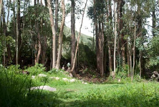 La Chacra Urubamba Hostel: Our Front Yard