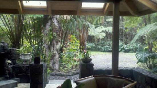 Volcano Mist Cottage: looking out the kitchen window