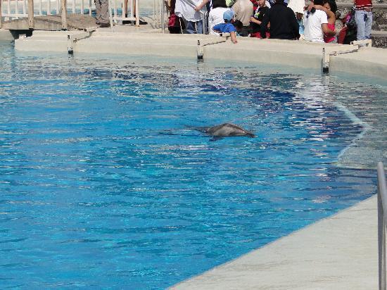 Six Flags Mexico : En el delfinario