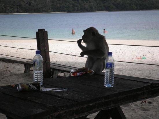 Langkawi Island Tours by Jet Ski: Monkey on the beach
