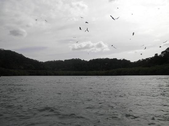 Langkawi Island Tours by Jet Ski: Eagle feeding