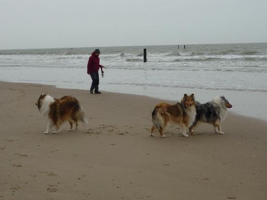 Hotel Bommelje: wir lieben den Strand und das Meer
