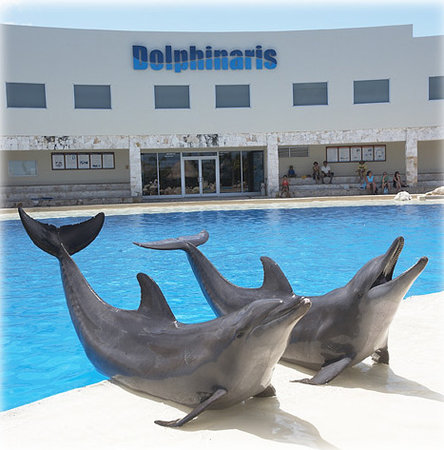 Waiting to play with you at Dolphinaris Cancun!