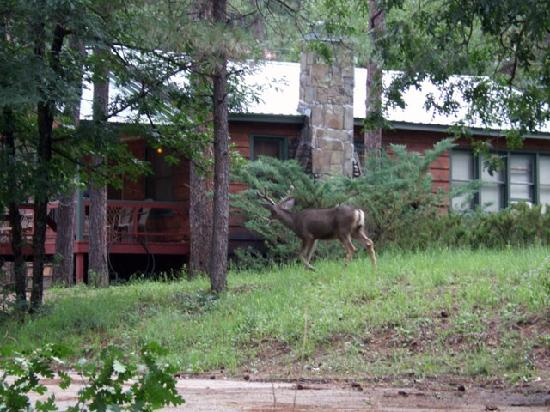 Deer Everywhere Forest Home Cabins Ruidoso