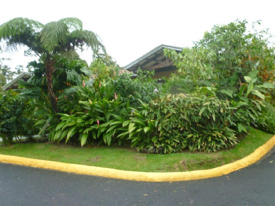Arenal Springs Resort and Spa : Lovely park-like grounds