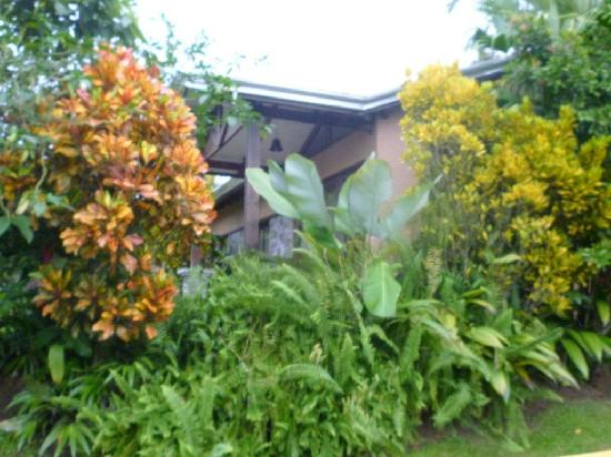 Arenal Springs Resort and Spa : Lush vegetation outside our bungalow