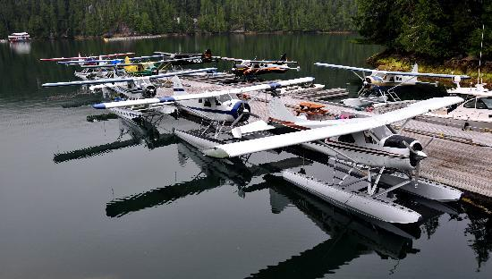 Eagle Nook Resort & Spa: Beavers on the Dock