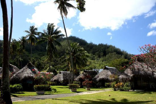 Hotel Hibiscus: Il giardino dell'Hibiscus