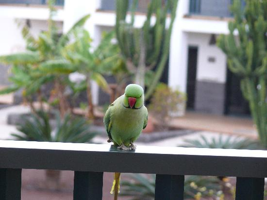 Las Marismas de Corralejo: bird on balcony
