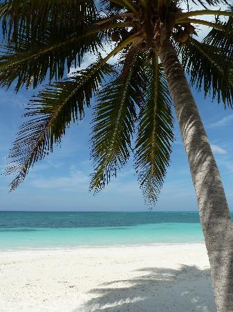 Hotel Cayo Levisa: Cayo Levisa - beach