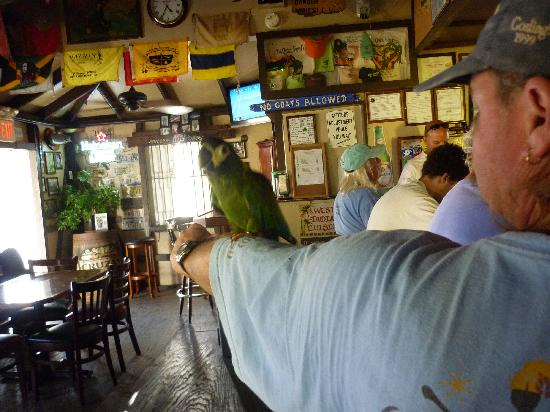 Inn at Tamarind Court: Man with Parrot at Quiet Mon