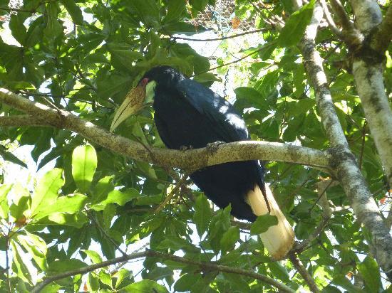 Maymyo Botanical Garden (National Kandawgyi Park): Toucan in aviary