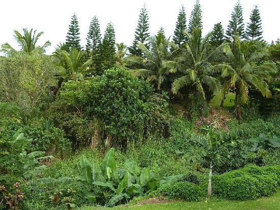 Maui Ocean Breezes: View from bedroom