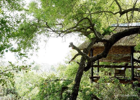 Londolozi Tree Camp Sala