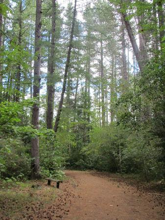 Heritage Hanmer Springs: Walk in the forest