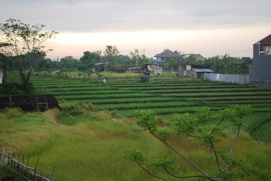 Echoland: View on the rice fields