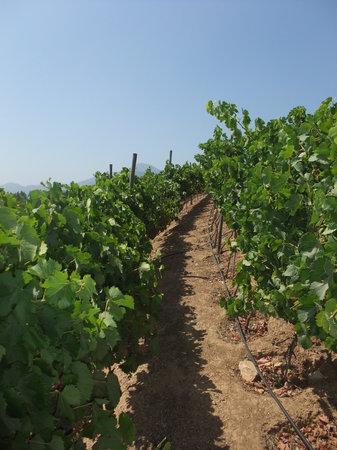 Uncorked Wine Tours: Chardonnay at Indomita