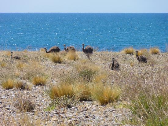 Province of Chubut, Argentina: Choiques en la Costa