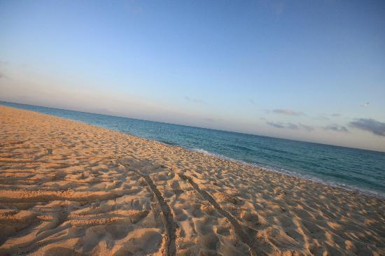 Melia Cayo Santa Maria : la plage
