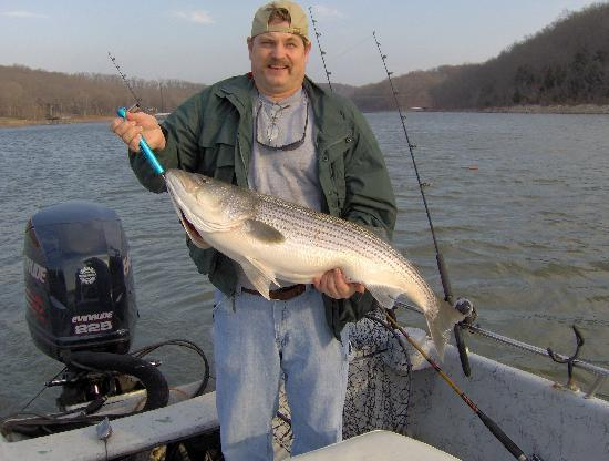 Lake Shore Cabins on Beaver Lake: Trophy striper fishing. Fishing guides pick up at our dock.