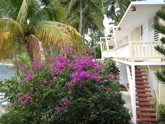 Patillas, Puerto Rico: Every room faces the ocean