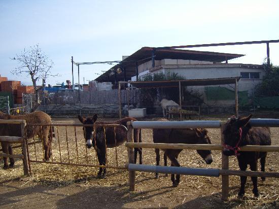 Nerja Donkey Sanctuary: the animals