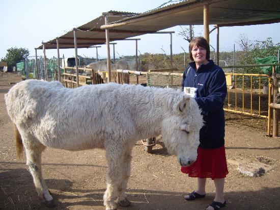 Nerja Donkey Sanctuary : pedro if i remember right. thats the donkey not my mum!
