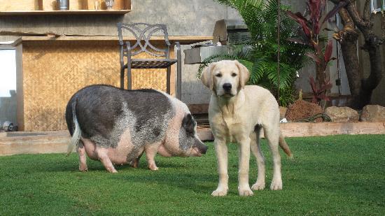 Lahaina Bungalow: house pets