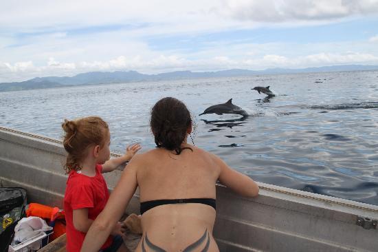 La Dolce Vita Holiday Villas: rencontre avec les dauphins